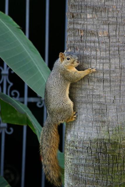 松鼠也是敏捷的抱树动物.树为它们提供了所需的所有东西,或许是图片