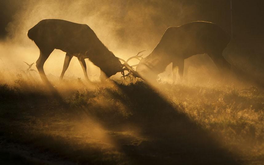英国野生动物摄影佳作