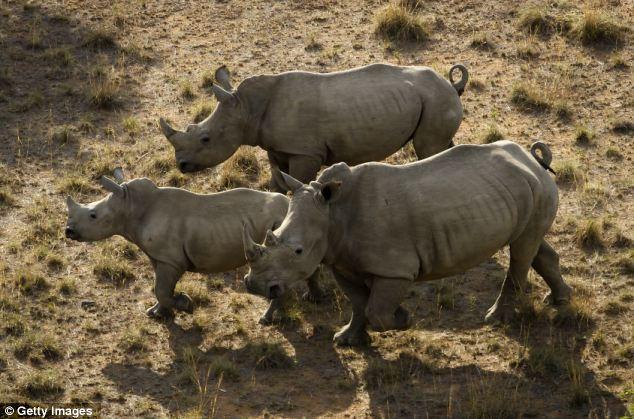 11月24日,费恩弗特野生动物保护区的犀牛.