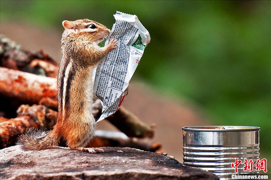动物趣味摄影:动物模仿人类瞬间