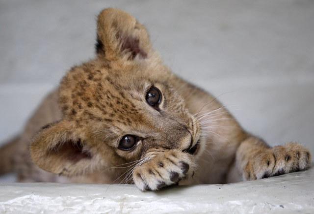 2012最可爱的45张动物宝宝照片