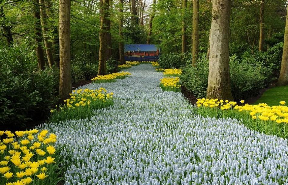 探访世界最大花园 700万株美丽花朵怒放