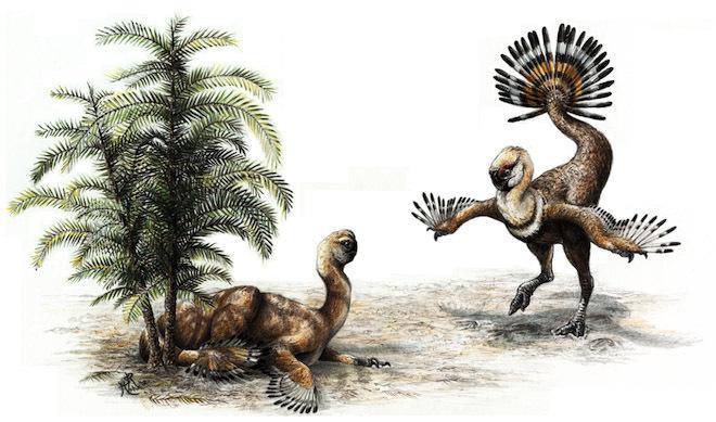 十大恐龙新发现:似鸟龙长翅膀不会飞行