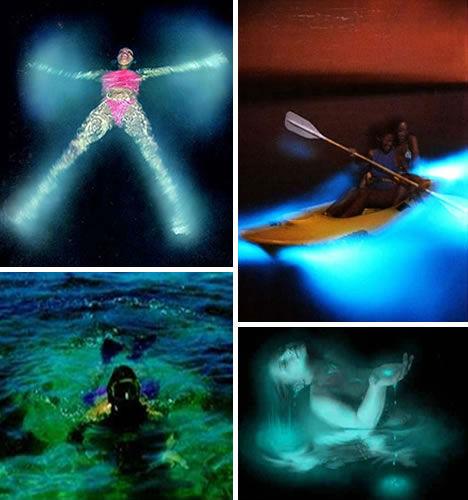 世界11处最美游泳胜地:波多黎各蓝色发光海水