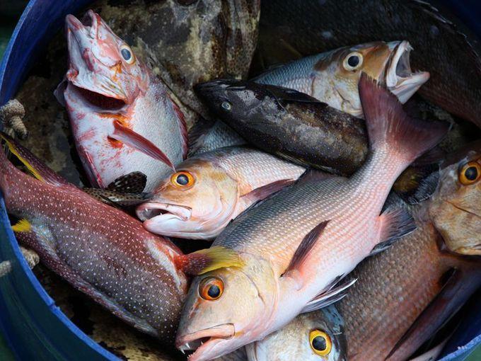 盘点15种神秘自然现象:洪都拉斯天上掉鱼