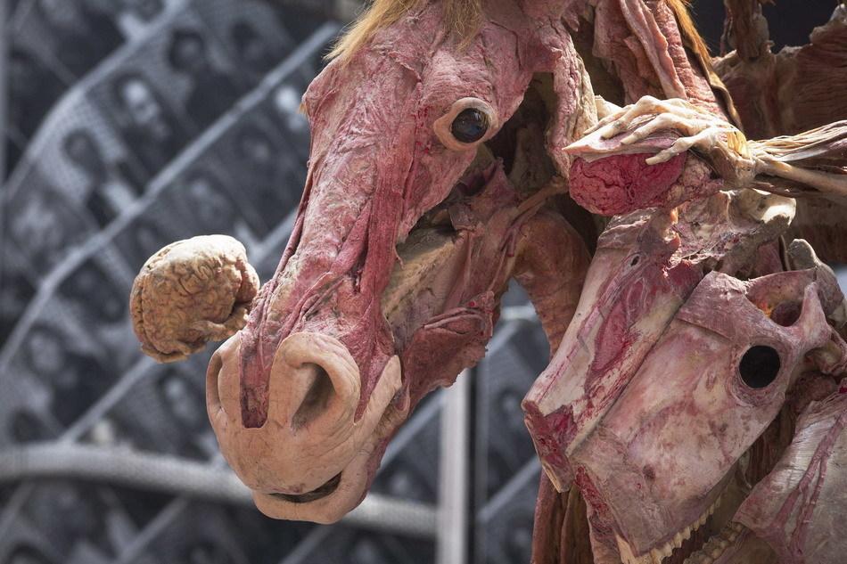 人马解剖塑化标本亮相美国纽约时报广场