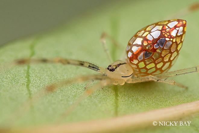 盘点世界罕见蜘蛛种类:身体结构精巧纤美