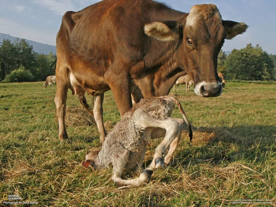 国家地理精选动物摄影作品