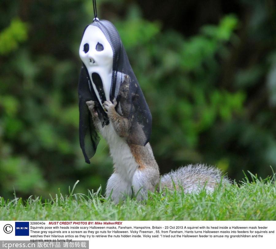 英松鼠万圣节也疯狂 戴鬼面具效果搞笑