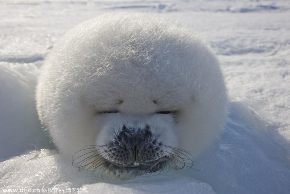 睡着也不忘卖萌:动物可爱睡姿大曝光