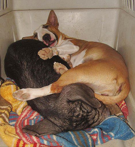 里,小狗可以和乌龟窃窃私语,小浣熊可以为狗狗按摩,兔子与狗