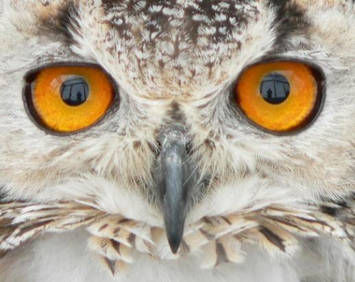 盘点世界十大最奇特动物眼睛