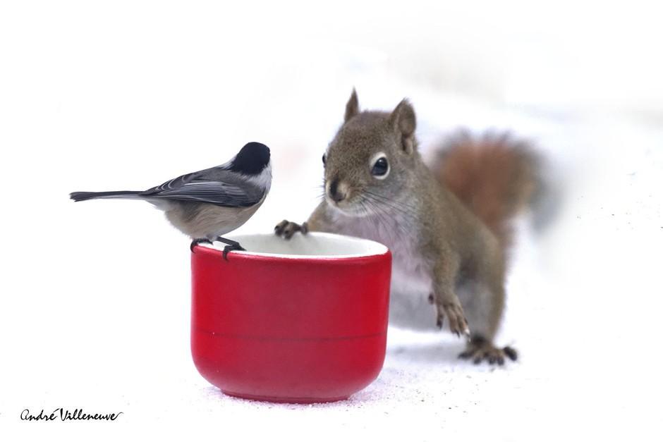 趣味动物摄影:松鼠和小鸟的友情故事