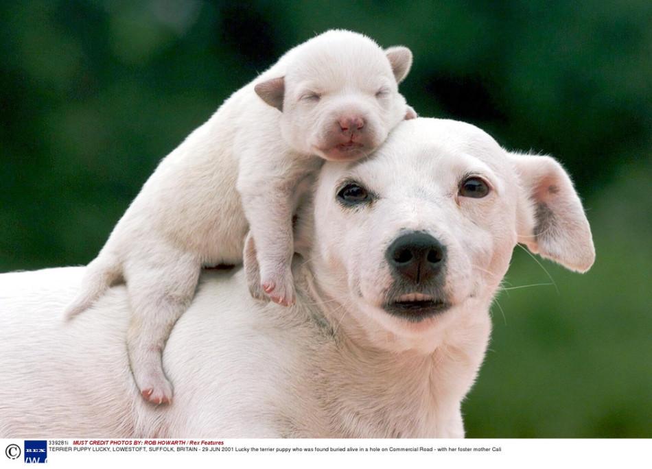 动物界母子互动温情瞬间:大熊猫母子荡秋千