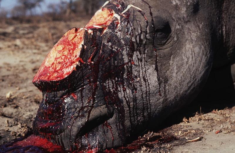 惨烈的动物屠杀