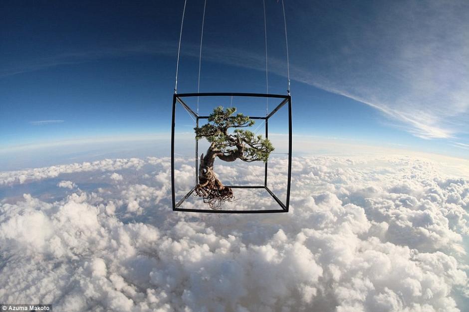 日本艺术家将鲜花和盆栽送往近3万米高空