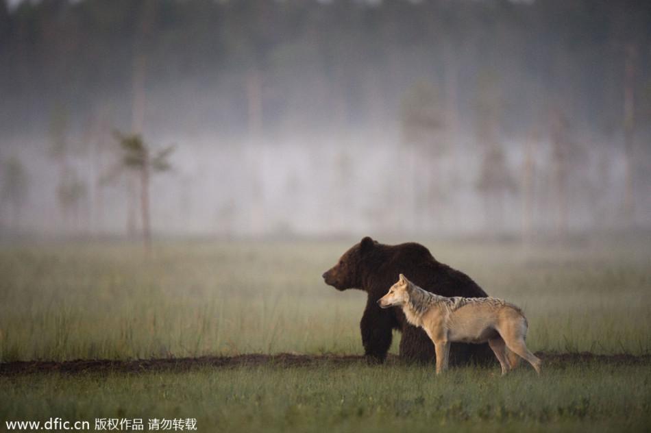 国际友谊日:动物跨物种的奇妙友情
