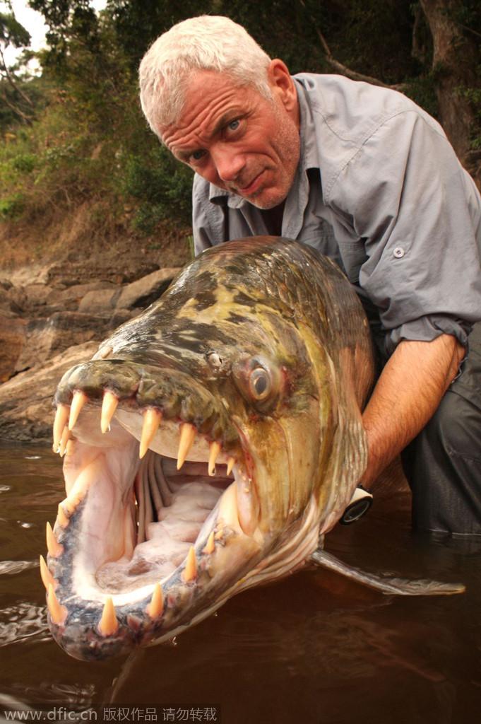 惊爆眼球的奇葩海洋生物:巨型食人鱼牙齿尖锐