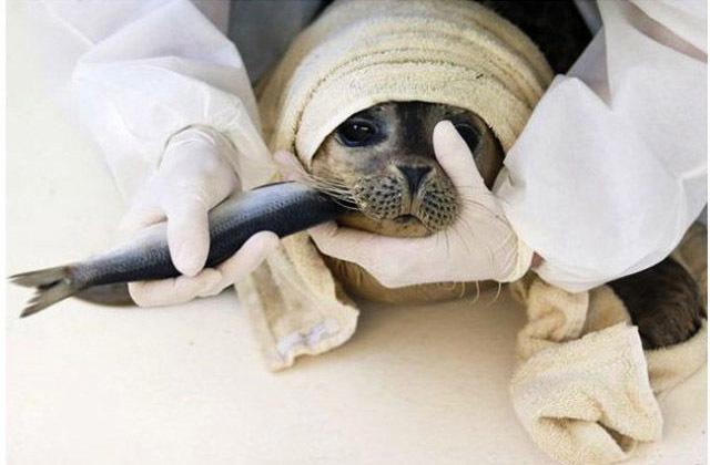 人与动物的暖心瞬间:背着小狗涉水