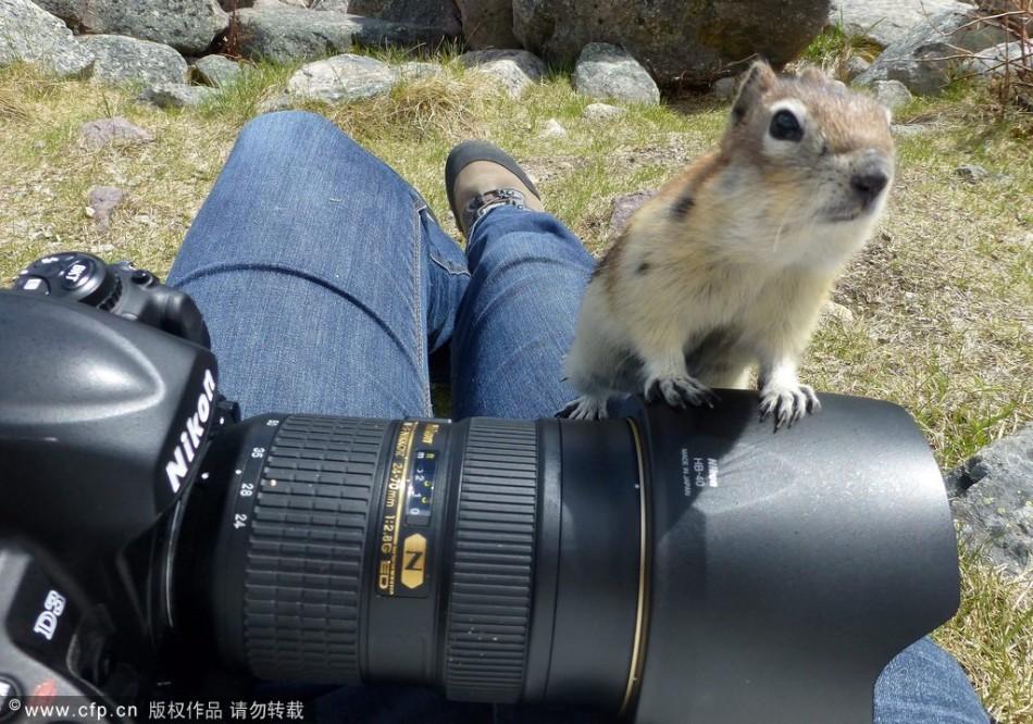 饥饿小松鼠镜头感十足:好奇张望挥手致意