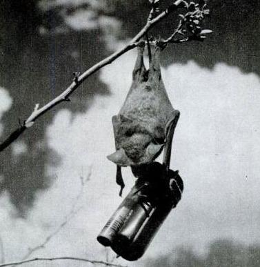 """战争史中的动物军团:蝙蝠""""深入敌营""""引爆"""