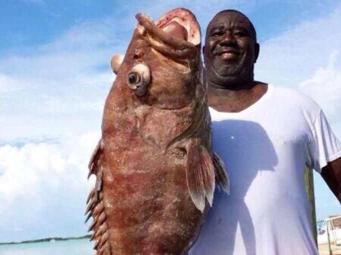 巴哈马群岛捕获各种怪鱼