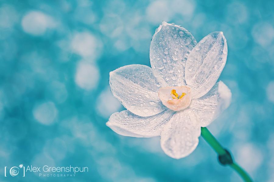 一叶知秋:微观世界的美与柔