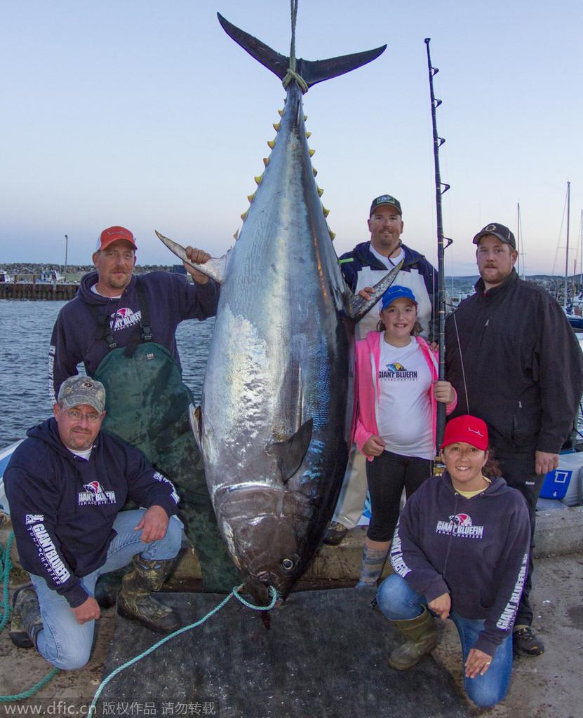 加拿大12岁女孩搏斗2小时钓起561斤金枪鱼