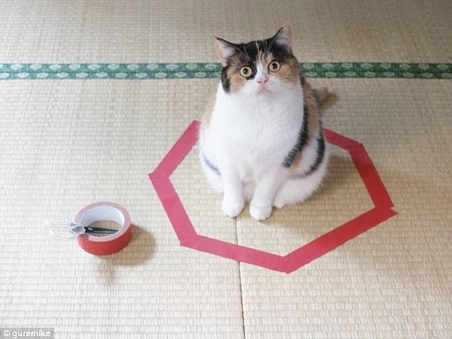 奇怪本能驱使猫喜欢坐在圆圈里:至今未能解释