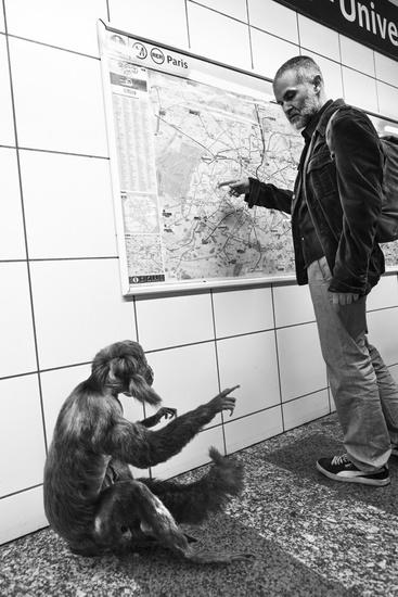巴黎地铁里竟有动物 创意无限的动物摄影