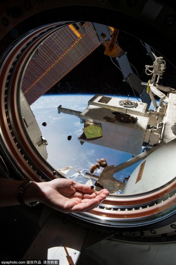 宇航员吃零食:空间站食物悬浮难吃到