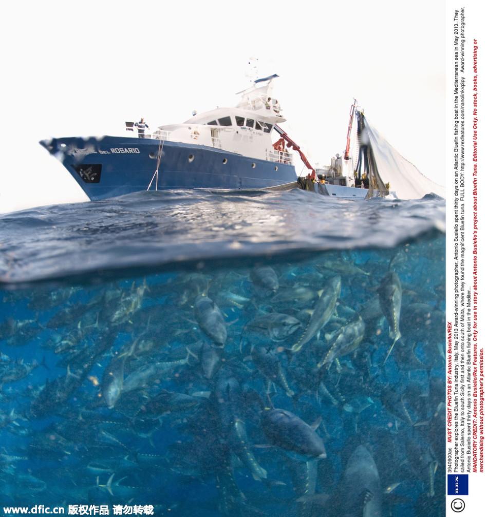 西洋蓝鳍金枪鱼渔船上,和意大利渔民一起,他们最终到达马耳他