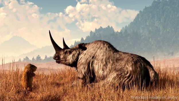 犀牛的演化故事:它们是如何征服世界的