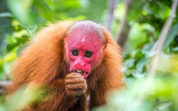 15种最稀奇古怪的ag游戏直营网|平台:亮绿色纽虫伸粉红色吻