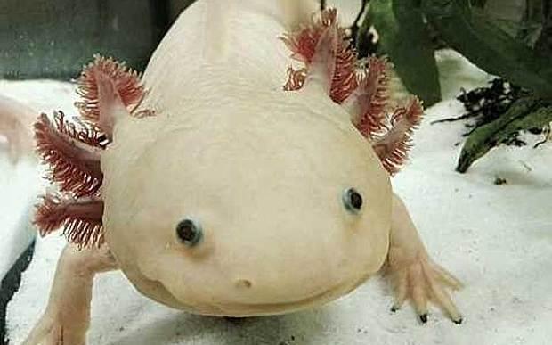 15种最稀奇古怪的动物:亮绿色纽虫伸粉红色吻
