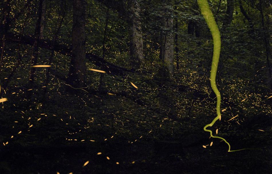 活色生光:自然界既普通又神奇的生物荧光