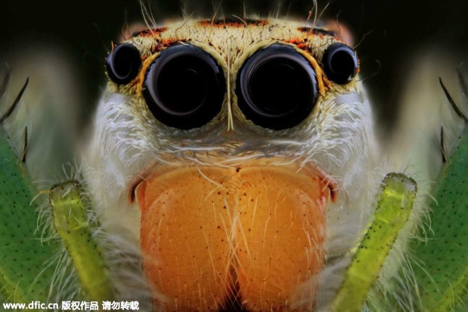 超微距拍摄昆虫眼睛