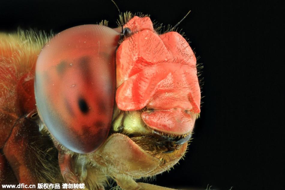 超微距拍摄的昆虫的眼睛