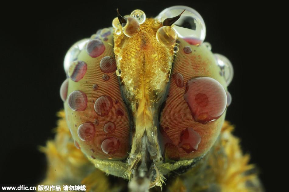 超微距拍摄昆虫的眼睛