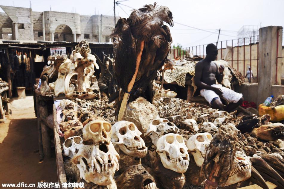 世界最大巫毒市场:从晒干的鬣狗头到蟒蛇皮