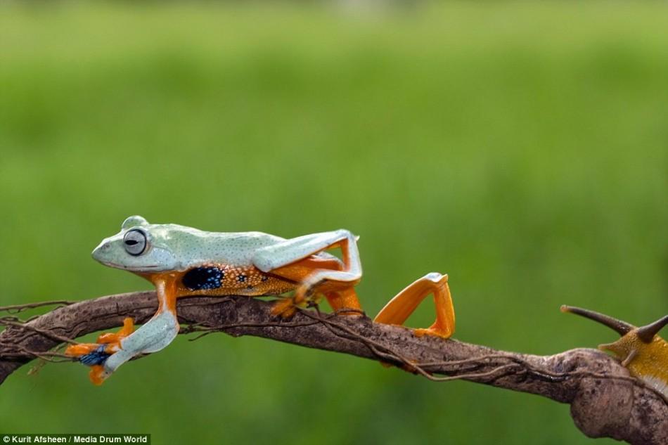 没有在短树枝上跳跃,而是决定在一个行动迟缓的蜗牛的背上搭便车