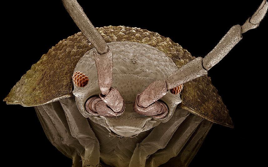 电子显微镜下的微小生命:苍蝇眼睛似红宝石