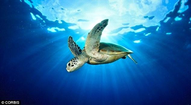 南太平洋发现荧光海龟:爬行动物第一例
