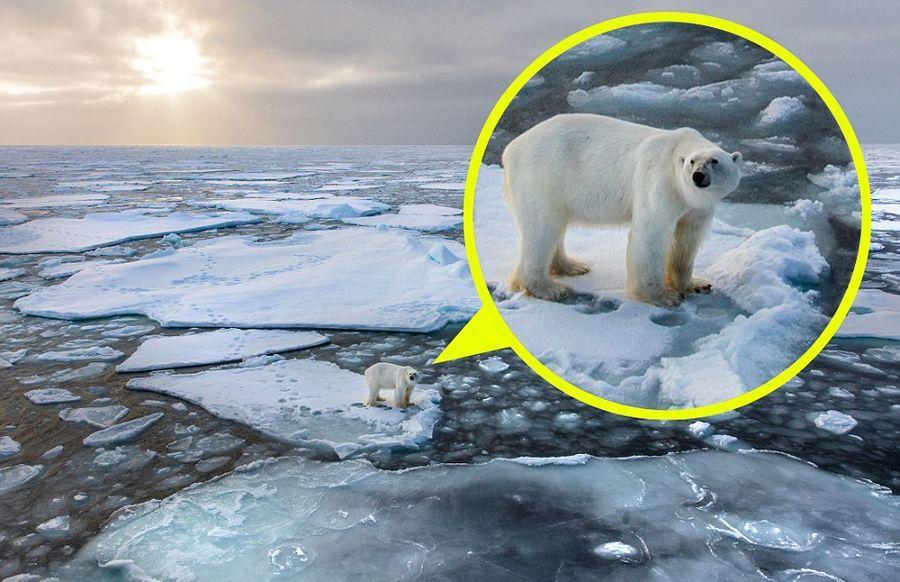 北极熊接近轮船求食尴尬被困浮冰:生存面临威胁