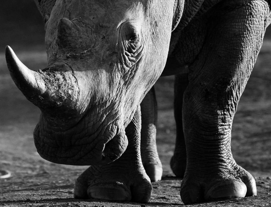 黑白展现野生动物力量