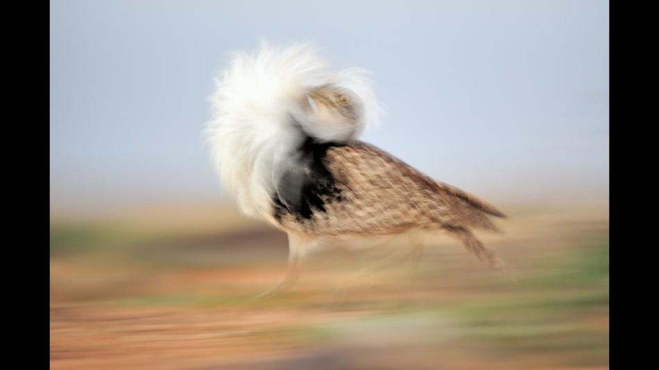 动物奔跑获奖图片