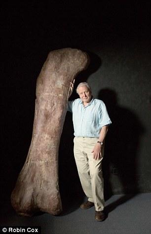 阿根廷发现高达37米恐龙化石:草食性泰坦巨龙
