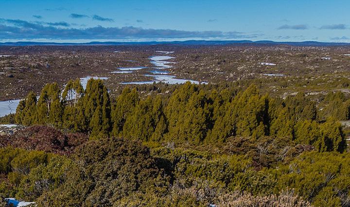 澳远古森林火灾后满目疮痍 千年古树尽毁