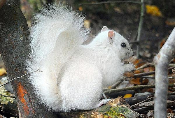"""动物界的""""白化病患者"""":基因突变导致白化变种"""