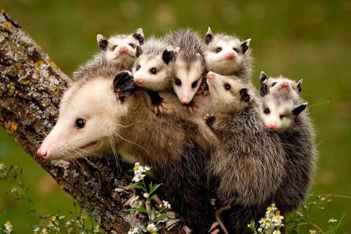 母爱的伟大!动物宝宝和妈妈大玩爱的抱抱